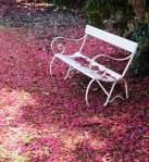 Monthly Garden Visit 3